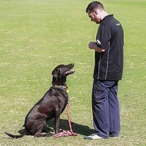 dog training puppy training dog obedience puppy obedience