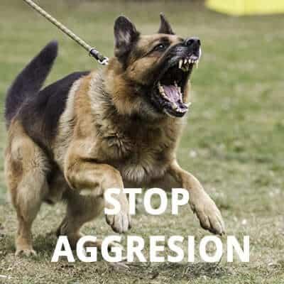Wetherby dog training