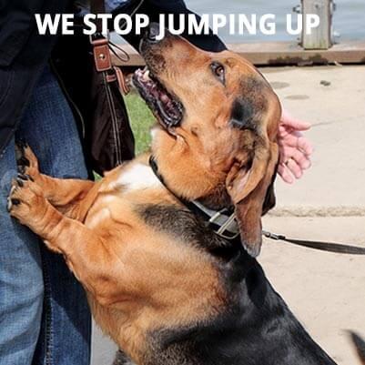 Dog-Jumping-Up