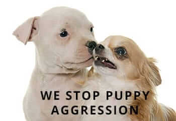 Puppy-Aggression