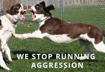 Springer-aggression