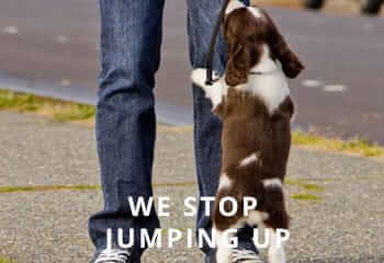 Springer-jumping-up