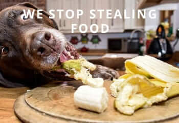 Stealing-Food