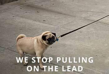 Pug-Pulling