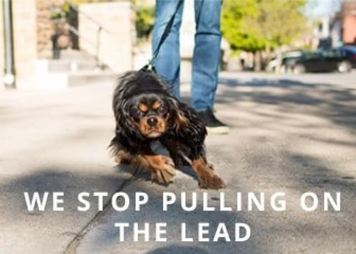 Pulling-on-Lead
