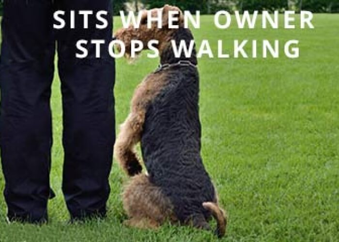 Sit-When-stop