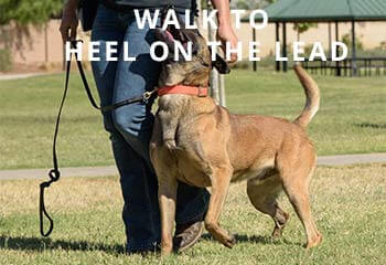 Walk-to-heel-on-the-lead
