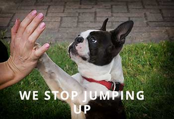 Jumping-2.jpg