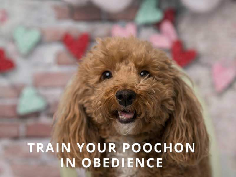 Train-in-Obedience