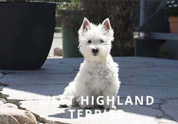 Puppy-Soliloquy.jpg